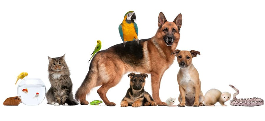 group of pets all covered by pet insurance